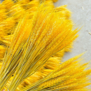 麦穗干花防霉剂 不怕潮湿发霉
